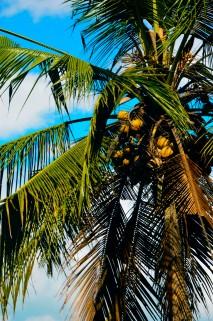 Palmtree - Ubud - Bali