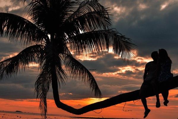 Leaning Palmtree - Koh Phangan - Thailand