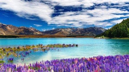 Lake Tekapo - New Zealand