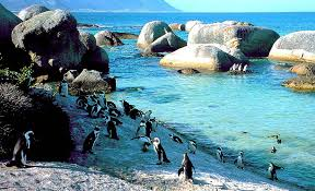 Swimming with Penguins - South Africa
