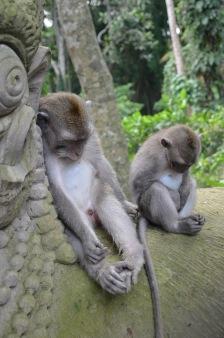 Bali apen1