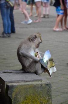 Bali apen2