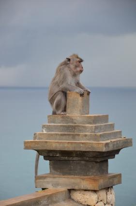 Bali apen3