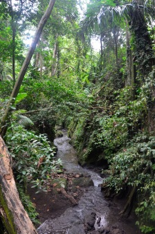 Bali apenbos1