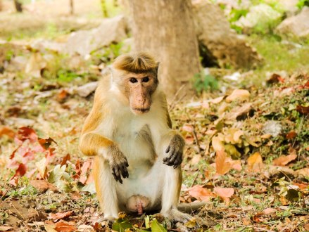 Sri Lanka apen2